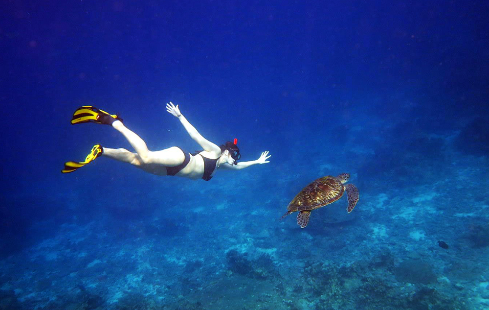 Similan Snorkeling with Turtles