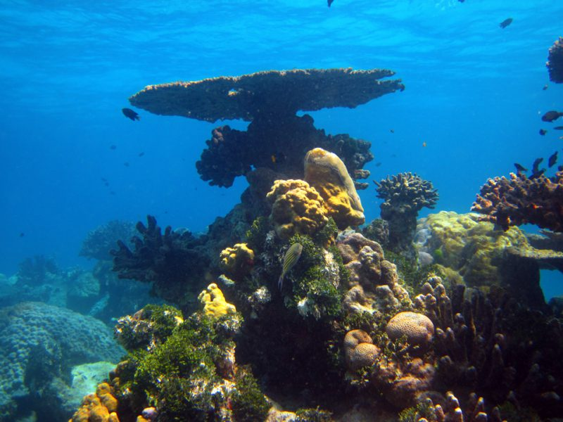 Coral gardens at the Similan Islands