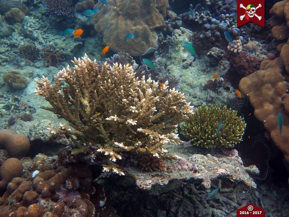 New Corals