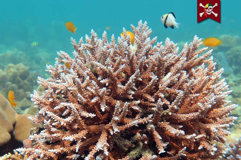 Corals and Fish