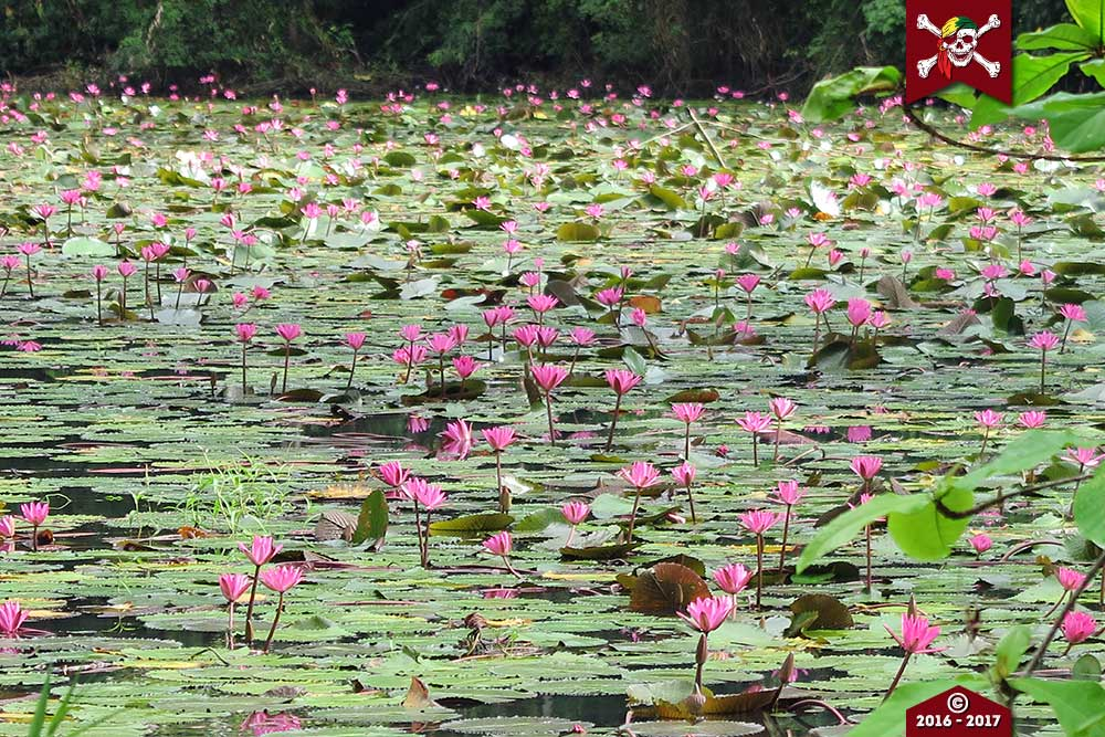Flowers at Surin
