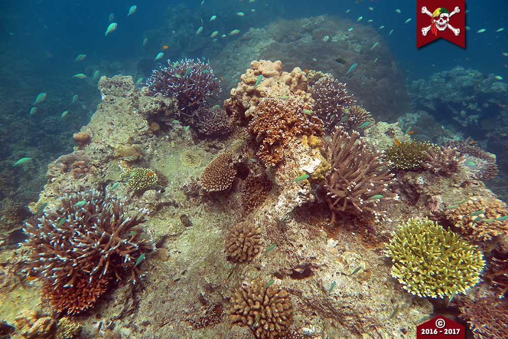 News Corals on Old Corals