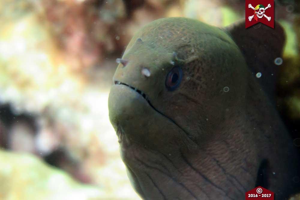 Menacing looking moray eel